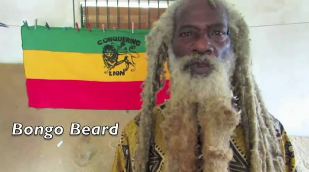 Bongo Beard transitioned