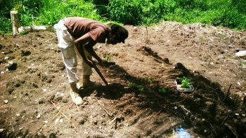 Rastafari Ancients Farming Project